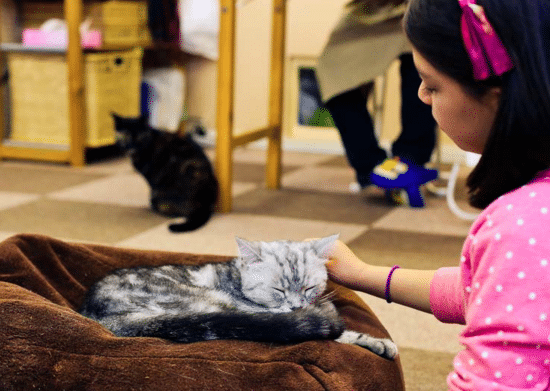 things-to-do-in-tokyo-with-kids-cat-cafe