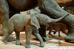 paris-with-kids-museum-natural-history-