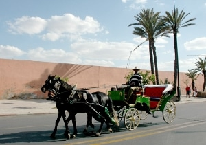 marrakesh-with-kids-caleche